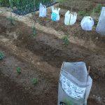 シーズン到来!夏野菜苗の植え付けやってみた