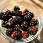 【豊作!】ブラックベリーで果実酢作ってみた